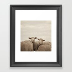 Smiling Sheep  Framed Art Print