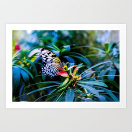 An Ode to the Butterfly Museum Art Print