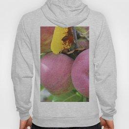 Red Apples Hoody