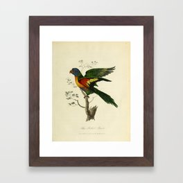 """""""Blue Bellied Parrot"""" by Sarah Stone, 1790 Framed Art Print"""
