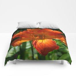 Fiery Daylily Flower - Hemerocallis 'Coleman Hawkins' Comforters