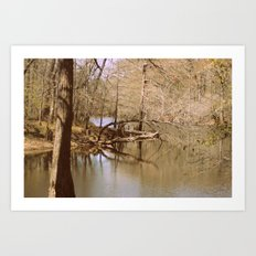 Serene Stillness Art Print