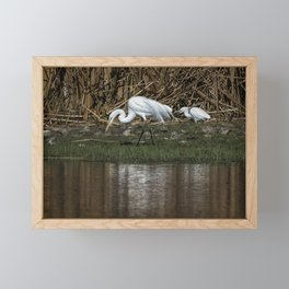 Great and Snowy Egrets, No. 2 Framed Mini Art Print