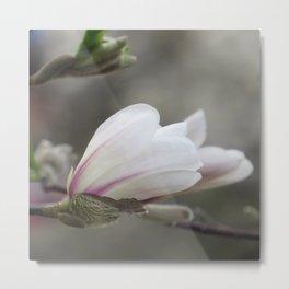 magnolia 03 Metal Print