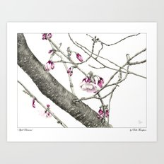 April Blossoms Art Print