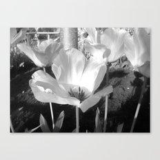 Moonflower Canvas Print