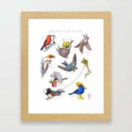 Spring Birds of the East Coast Framed Art Print