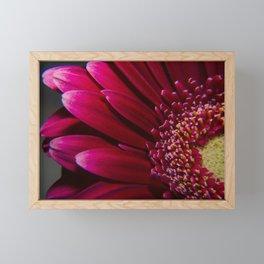 Deep red gerbera flower macro photo photography Framed Mini Art Print