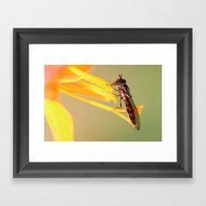 Mr Bug Framed Art Print