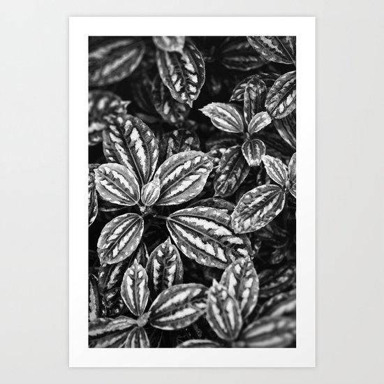 Variagated Art Print
