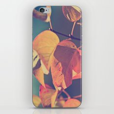 Color of the Leaves iPhone & iPod Skin