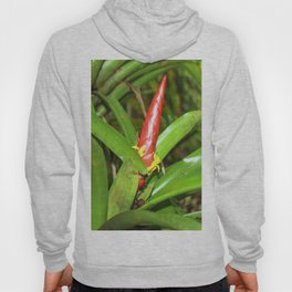 The Bromeliad (the air) plant in flower - El Yunque rainforest PR Hoody