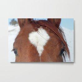 Gros Ventre Horse Metal Print