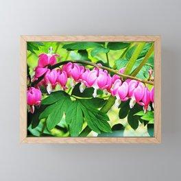 Bleeding Hearts Framed Mini Art Print