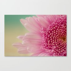 Pink bursts, Floral Macro Photography Canvas Print