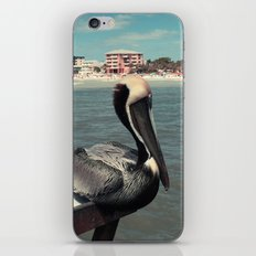 Florida Pelican Color Photo iPhone & iPod Skin