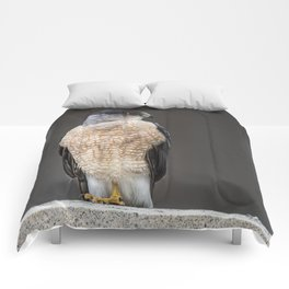 Red eyed Coopers Hawk Comforters