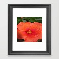 flower ##### Framed Art Print
