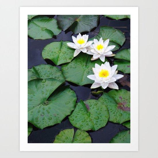 Lilly pad blossom  Art Print