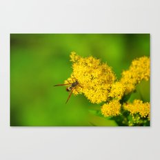 Paper Wasp - Yellow Flowers Canvas Print
