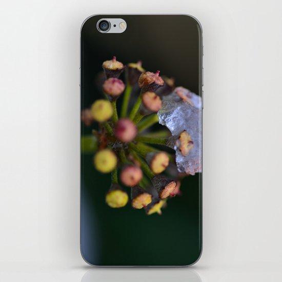 Snow On The Wild Ivy iPhone & iPod Skin