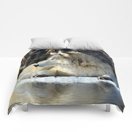 Wolf resting Comforters