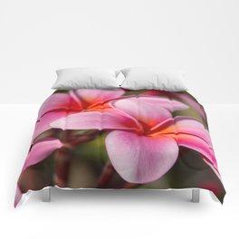 Divine Joy Comforters