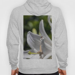 Red insect smiling on a lily Hoody