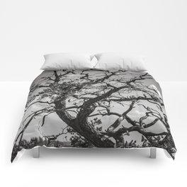 Ancient Tree, Survivor, Alive Comforters