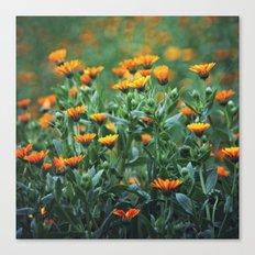 Orange Flowers #1 Canvas Print