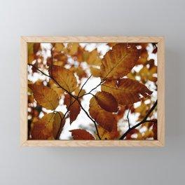 Beech Leaves Framed Mini Art Print