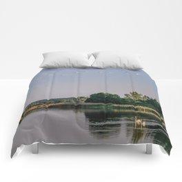 Swan lake Comforters