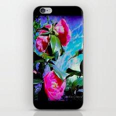Winter Roses iPhone & iPod Skin