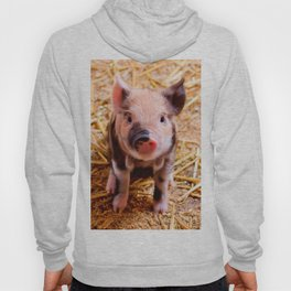 Cute Baby Piglet Farm Animals Babies Hoody