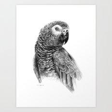 Gray Parot G083 Art Print