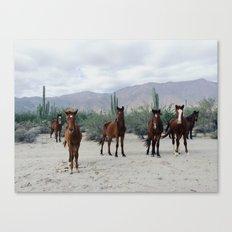 Bahía de los Ángeles Wild Horses Canvas Print