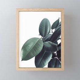 Ficus Elastica #13 #decor #art #society6 Framed Mini Art Print