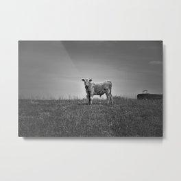 Young Calf Metal Print