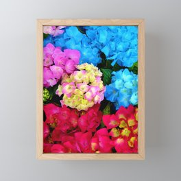Red Blue Rose Flower Blossoms Hydrangeas Framed Mini Art Print
