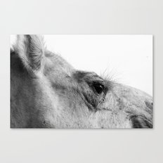Ready for my close up... Canvas Print