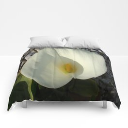 Overhead View of A White Calla Lily Against Pebbles Comforters