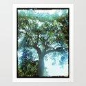 Ramona Oak Tree by oldurbanfarmhouse