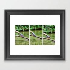 Costa Rican Rain Forest - Bird Framed Art Print