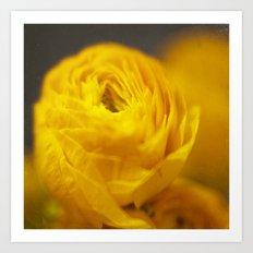Golden Ranunculus Flowers Art Print