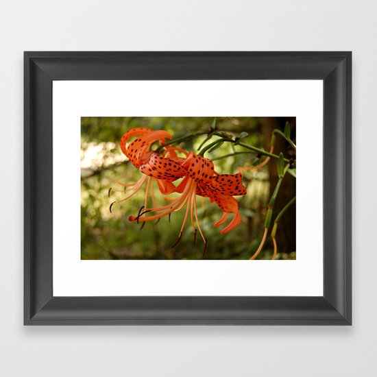 Wild Tiger Lily Framed Art Print