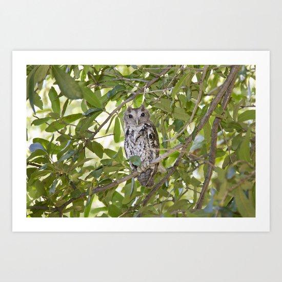 Screech Owl Full Art Print