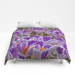 Striped Purple Crocuses Manipulated Comforters