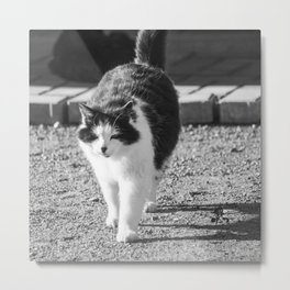 Fluffy cat in white and black Cat04A Metal Print