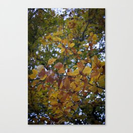 Autumn in Portugal Canvas Print