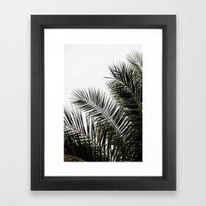 Palm Leaves 3 Framed Art Print